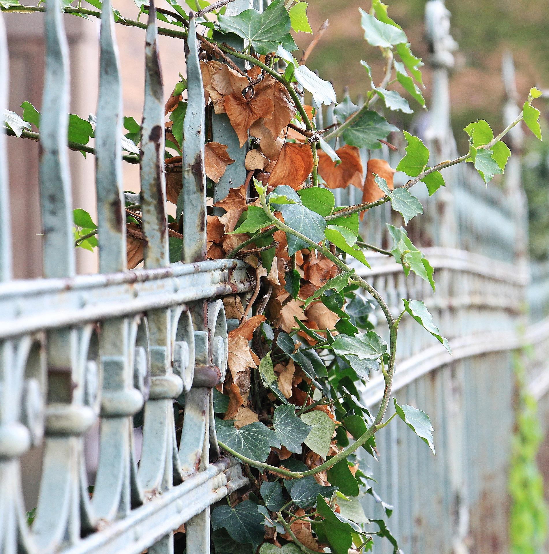 Postavit železný, nebo betonový plot?